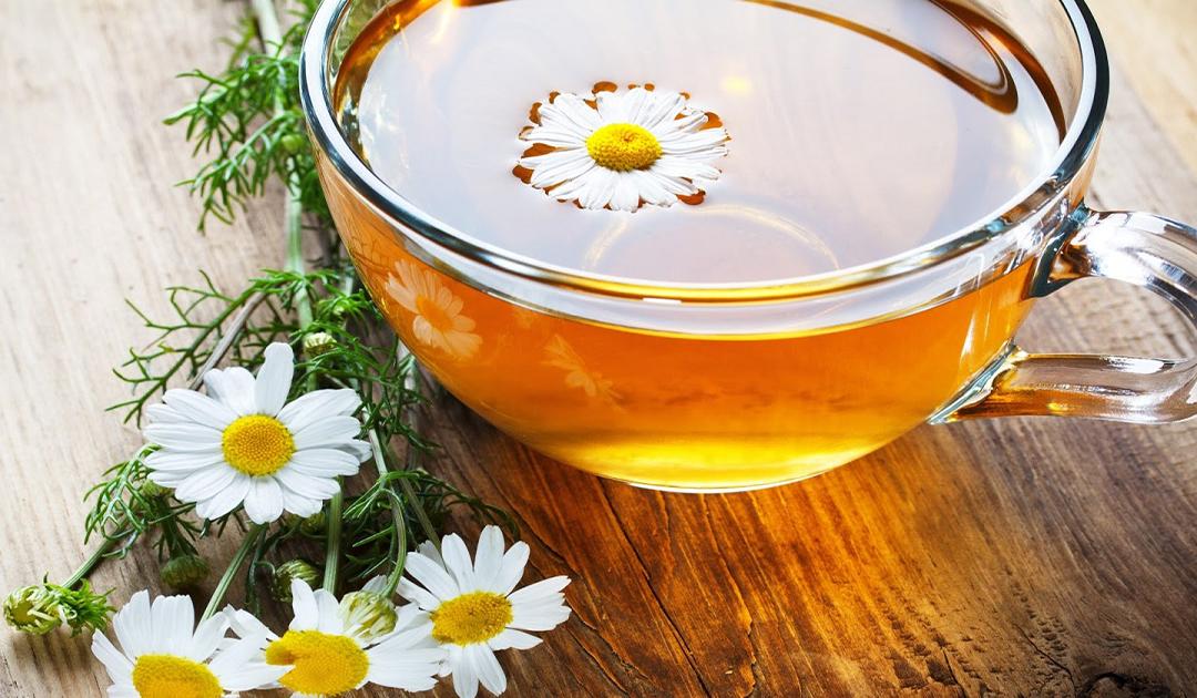 Thức uống từ hoa cúc trắng giúp chữa hoa mắt , chóng mặt hiệu quả